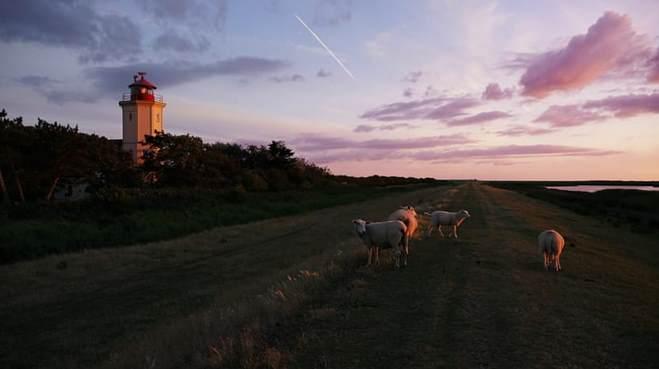 Beside the sunset